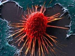 Белорусские биологи разрабатывают вакцину от рака