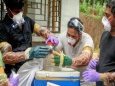 Нипах, опасный вирус из Индии