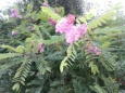 Теплая осень спровоцировала цветение садов