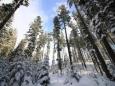 О самой холодной и теплой зимах в Беларуси