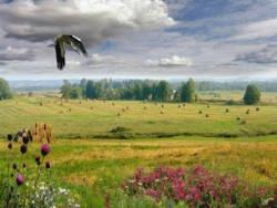 Беларусь занимает 35 место по индексу экологической эффективности