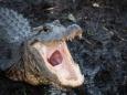 Полиция США борется с крокодилами наркоманами