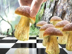 Небывалый урожай грибов повлиял на экспорт